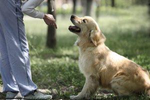intervencion con perros